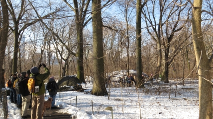 Birders at rhe feeders at the Ramble Central Park jamiesbirds 1-25-15