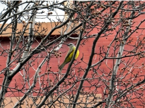 Couchs Kingbird photo a by Jamie Koufman West Village 10014 1-3-15