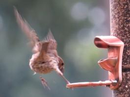 Finch landing1